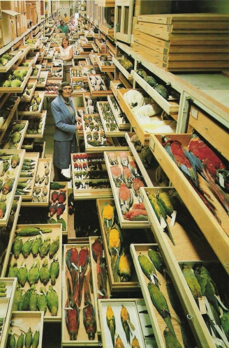 Taxonomists - conscientiousness at its limits